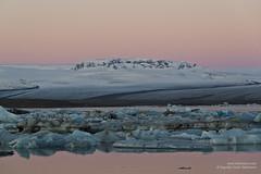 shs_n8_067779 (Stefnisson) Tags: ice berg landscape iceland belt venus glacier iceberg gletscher glaciar sland icebergs jokulsarlon breen vatnajokull jkulsrln ghiacciaio jaki girdle vatnajkull jkull jakar s gletsjer ln venuss  glacir sjaki venuses sjakar mvabyggir stefnisson mfabyggir mavabyggdir mafabyggdir
