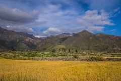 cornfield (pzartmann) Tags: sky yellow cornfield canyon mountians colca bluy