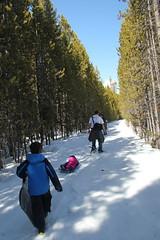 Hiking through narrow trees (Aggiewelshes) Tags: travel winter snow april snowshoeing adrian wyoming olsen jacksonhole colterbay jovie grandtetonnationalpark 2016 gtnp