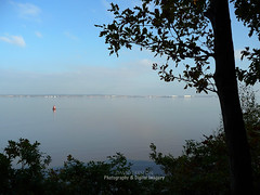 RIVER MERSEY (David~Preston) Tags: uk england tree water silhouettes eastham merseyside rivermersey thewirral