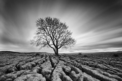 Lone Tree (Adam Karnacz) Tags: longexposure tree vlog lonetree malham blackandwhit