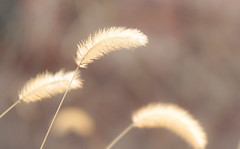 As soft as it can be... (edward.cheung) Tags: sunlight plant nature sony korea namdaemun a6000