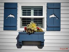 Cottage's window at Crystal Pier (France-) Tags: two usa window sandiego cottage bleu shutter deux pacificbeach fentre blanc windowbox californie aeonium 893 crystalpier etatsunis volet persienne boitefleurs