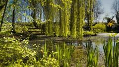 Parc des Sources (Yasmine Hens) Tags: green water eau europa flickr belgium ngc vert parc namur hens yasmine wallonie world100f iamflickr flickrunitedaward sonyilce7 hensyasmine
