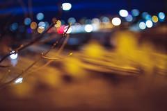 Signs of spring (thethomsn) Tags: wood city plants signs tree dark season deutschland lights spring branch dof nightshot nacht bokeh sigma citylights change bluehour bud wideopen 30mm primelens 600d