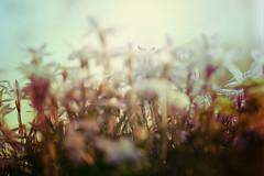 blur-dreamy-texture-texturepalace-37 (texturepalace) Tags: blur color leaves cc creativecommons dreamtextures texturepalace blurtextures