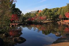 Autumn scene (Go Go Janet) Tags: japan garden japanesegarden maple pond    nara redleaves