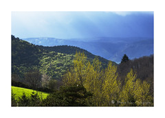 Printemps-DSC00763 (hervv30140) Tags: blue trees sky france green nature yellow jaune montagne landscape vert bleu ciel paysage arbre languedoc gard aveyron