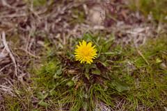 IMGL2944 (tseringzzz) Tags: flower nature portraits nike puma