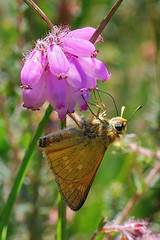 Upside down (Cor Slee) Tags: flower macro nature closeup butterfly bokeh ngc