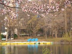P5020677 (mina_371001) Tags: park japan boat spring sapporo hokkaido sakura cherrybrossom nakajimapark photographywork olympusomdem10