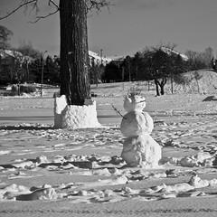 Bonhomme de neige/Snowman (bob august) Tags: winter bw snow canada blackwhite snowman nikon montral noiretblanc hiver qubec squareformat neige janvier bonhommedeneige 2016 villeray d90 parcjarry montreal nikkor18135mm nikond90 aperture3 formatcarre 2016rpdaoust