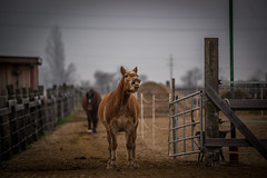 """smile ("""" Bernhard Witt """") Tags: horse tamron70200 sonyalpha850"""