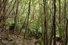 20160125-IMGP2548 (timhughes) Tags: australia tasmania hobart tassie mtwellington ferntree mountwellington 2016