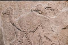 DSCF6996.jpg (Darren and Brad) Tags: england london camels thebritishmuseum