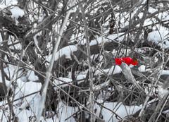 East Point Park (vernonbone) Tags: winter ontario landscape outside nikon roadside lakeontario 2016 snowice eastpointpark