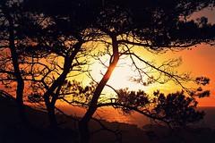 10/02/16 (ebonyteeceround) Tags: street trees sunset portrait people urban tree beach wales landscape person graffiti town hill 85mm hills aberystwyth 450d