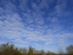 Wide open space (Lexie's Mum) Tags: blue sky white clouds walk treetops dappled 116 96116