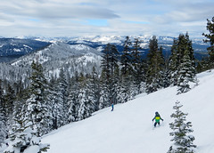 Trees off Sawtooth Ridge at Northstar (benjaminfish) Tags: snow ski january tahoe northstar 2016