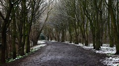 Muddy Walk........ (klythawk) Tags: nottingham trees winter brown white snow black green bird nature grey mud sony magpie 2470mm colwickpark klythawk a7ll