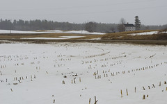 (amy20079) Tags: winter house snow field landscape march moody cloudy gray maine newengland dreary bleak snowing desolate muted farmfield nikond5100