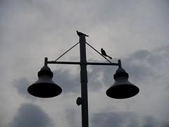 light lamp birds silhouette
