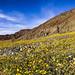 Desert+Early+Bloom