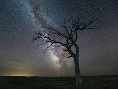 """""""Final Frontier"""" by Aaron J. Groen -  HomeGroen Photography HomeGroenPhotography.com   A lone tree seeming to reach for the center of our Milky Way Galaxy   Photo taken last summer in South Dakota west of Montrose.  Canon EOS 6D and ef 16-35mmf (HomeGroenPhotography) Tags: instagramapp uploaded:by=instagram"""