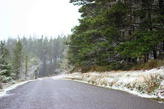 the dusting... (ggcphoto) Tags: road trees snow pine forest outdoor countryroad snowday dusting