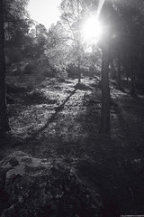shadows are beautiful :) (SKZNALLSTARZZ;) Tags: trees sunset shadow blackandwhite bw sun forest rocks blury
