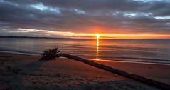 Log (Paul Rioux) Tags: morning seascape beach nature sunrise dawn log britishcolumbia shoreline vancouverisland driftwood seashore daybreak colwood westshore esquimaltlagoon prioux