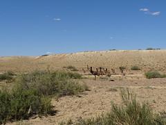 Oodnadatta Tk DSC08745 Sth Australia (Iancochrane) Tags: australia outback southaustralia oodnadattatrack wabmakadarbu