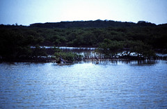 Bahamas 1989 (612) Long Island