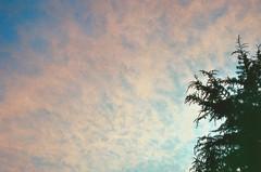 Pino (Pau Barr) Tags: sunset sky film clouds vintage atardecer nikon cielo nubes pino analogica n65