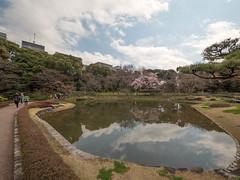 P1590598 (Rambalac) Tags: asia japan lumixgh4 flowers plant pond water азия япония вода пруд растение цветы