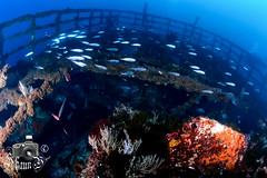 Ark of Jesus Christ (ShaunMYeo) Tags: scubadiving wreck gibraltar wrecks calpe underwaterphotography  gibilterra ikelite artificialreef      gibraltr  cebelitark gjibraltar ibraltaro hibraltar xibraltar giobrltar gibraltrs gibraltaras ibilt            arkofjesuschrist