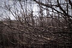The way to Spring (Jos Mecklenfeld) Tags: netherlands forest spring minolta groningen bos lente wald frhling terapel voorjaar rokkor westerwolde primvar minoltamdlens sonynex3n