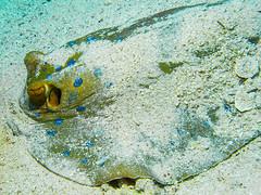 IMG_0272 (eye[4]eye) Tags: egypt diving gypten tauchen bluewaves
