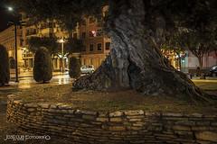IMG_18878 (surluis) Tags: lluvia ciudad olivo castelln