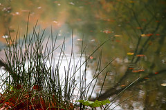 Deeply perception (Explored, 26.03.2016) (RKAMARI) Tags: light lake art nature water contrast reflections nationalpark saturated colours dof cities calm zen serenity serene contemplative bolu yedigller intimatelandscape