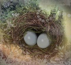 Eggs in a Nest (susancvineyard) Tags: holiday bird floral easter spring basket nest pastel paleblue easterbasket eggsinanest susanvineyard
