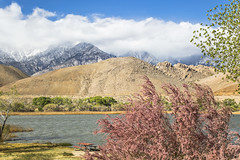 One Fine Day (socaltoto11) Tags: california travel clouds picnic lakes blueskies westcoast owensvalley snowcappedmountains inyomountains canonphotography westernlandscapes californialandscapes lakediaz westcoastlandscapes californiamountainranges westcoastmountainranges