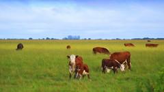 A La Fiesta del Ternero, Sauce, Ctes. (Eduardo Amorim) Tags: southamerica argentina kuh cow rind cattle cows sauce bull bulls ox toros ganado corrientes hereford calf tori oxen mucca toro bois khe vache vaca vacas vaches boi buey touro ternero amricadosul mucche taureau boeuf vieh stier amriquedusud boeufs buoi sudamrica rinder gado suramrica amricadelsur touros bueyes sdamerika taureaux bezerro mue bestiami btail americadelsud americameridionale terneiro eduardoamorim stiere provinciadecorrientes corrientesprovince vaeu
