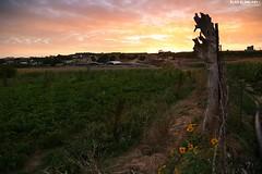 Sunset - Northern Gaza city (TeamPalestina) Tags: sunset sky sun sunrise canon landscape landscapes photo am amazing nice nikon photographer natural sweet live palestine comfort sunrays gaza beautifull palestinian  landscapecaptures