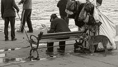 some shades of grey (mr_gngr) Tags: dog man water reading blackwhite fishing fisherman homeless bank