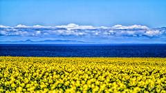 Blue & Yellow (Douglas McMann) Tags: sea snow coast coastal canon5d manualfocus moray blackisle 135mm morayfirth morayshire sandend jupiter11a