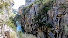 Foz de Lumbier. Spagna (Guly_Julien) Tags: parco bird nature river de natural reserve natura canyon gorge prey foz birdofprey reserva gola the rapaz predatory gole naturale riserva irunberri lumbier rapaces rapaci avvoltoio