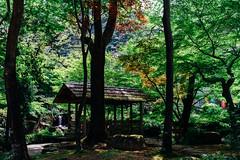 Gifupark_02 (Sakak_Flickr) Tags: park gifu nokton kinkazan nokton35f14