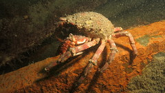 Blackhawk01 (MatYts) Tags: boat ship diving shipwreck solo bow blackhawk wreck swanage charters