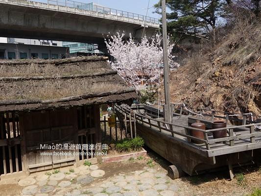 안산공원벚꽃25